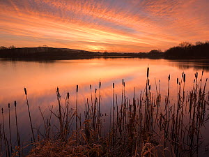 Lower Tamar Lakes, reflections and rushes, colurful winter sunrise, North Cornwall, UK. January 2018.  -  Ross Hoddinott