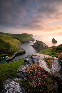 Boscastle Harbour, late evening light of harbour and north Cornish coast, Cornwall, UK. June 2018.  -  Ross Hoddinott