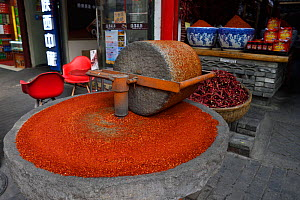 Chili mill in front of a Chili sales stands grounding chilies into powder, Old Town Muslim quarters, Xian City, Shaanxi, China, April 2018. - Staffan Widstrand / Wild Wonders of China