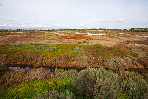 Saltmarsh and road on part of the Ria de Alvor Nature Reserve,  Algarve, Portugal, February 2017. - Mike Read