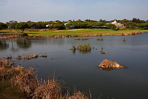 Lake at Quinta do Lago golf course part of the Ria Formosa Nature Reserve, Algarve, Portugal, February 2017 - Mike Read