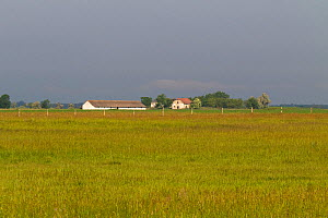Farm buildings on puszta grassland near Tiszaalpar, Kiskunsag National Park, Hungary, June. - Mike Read