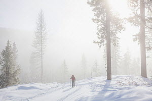 Woman cross-country skiing at the summit of Suntop Mountain in the Baker-Snoqualmie National Forest.  Washington, USA. February 2018. Model released.  -  Kirkendall-Spring
