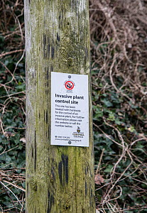 Japanese knotweed (Fallopia japonica) sign indicating control by herbicide. Cornwall, UK. March. - Adrian Davies