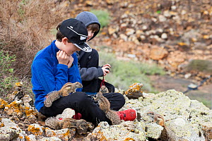 Boys feeding Barbary ground squirrels (Atlantoxerus getulus). Fuerteventura, Canary Islands, Spain. February 2018. - Robin Chittenden