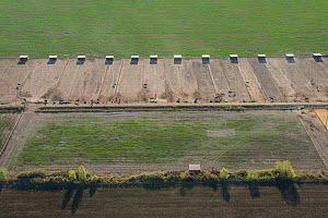 Aerial view of paddocks and shelters for Camargue horses used for riding, Camargue, France. October.  -  Jean E. Roche