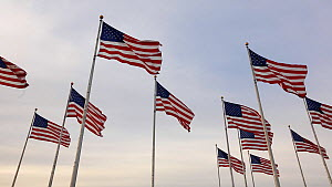 Group of American flags flying in Liberty State Park, New York, USA, June 2016. (This image may be licensed either as rights managed or royalty free.) - Gavin Hellier