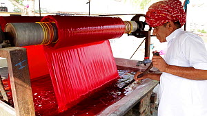 Roller pulling fabric through a bath of red dye in a textiles factory,with man stirring the dye, Jaipur, Rajasthan, India, Model released, January 2018. Hellier  -  Gavin Hellier