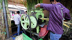 Sugar cane press extracting fresh cane juice, Udaipur, Rajasthan, India, January 2018. (This image may be licensed either as rights managed or royalty free.) - Gavin Hellier