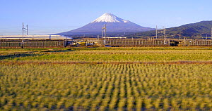 Panning shot of a Shinkansen bullet train passing through harvested rice fields, with Mount Fuji in the background, Honshu, Japan, November 2017. (This image may be licensed either as rights managed o... - Gavin Hellier