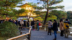 Timelapse of people visiting the Kinkaku-ji, otherwise known as the Golden Pavilion, a Zen Buddhist temple, Kyoto, Japan, November 2017. (This image may be licensed either as rights managed or royalty... - Gavin Hellier