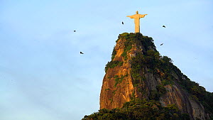 Black vultures (Coragyps atratus) soaring past the statue of the Cristo Redentor on Corcovado mountain, Rio de Janeiro, Brazil, September 2016. (This image may be licensed either as rights managed or... - Gavin Hellier