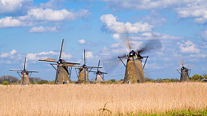 Timelapse of windmills turning, Kinderdijk UNESCO World Heritage Site, Netherlands, April 2017. (This image may be licensed either as rights managed or royalty free.)  -  Gavin Hellier