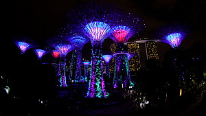 Wide angle shot of the Supertree Grove illuminated at night, Each tree is a large vertical garden, Gardens by the Bay, Singapore, June 2017. (This image may be licensed either as rights managed or roy...  -  Gavin Hellier