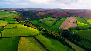 Aerial shot tracking over Exmoor National Park, showing moors and farmland, Devon, England, UK, October 2017. Hellier  -  Gavin Hellier