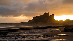 Timelapse of clouds moving over Bamburgh Castle at sunset, Northumberland, England, UK, October 2017. (This image may be licensed either as rights managed or royalty free.) - Gavin Hellier