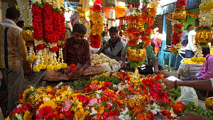 Man threading flowers in Krishna Rajendra flower market, Bangalore, Karnataka, India, January 2018. (This image may be licensed either as rights managed or royalty free.)  -  Gavin Hellier