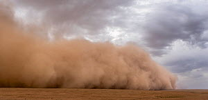 Sandstorm on steppe grassland, the wall of dust is approximately 150 meters high, Mongolia, June 2018. - Ben  Cranke