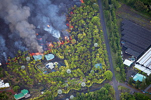 Lava originating from Kilauea Volcano, erupting from fissure 8, near Pahoa,  flowing through lower Puna into Kapoho, destroying agricultural properties and burning trees, streets, and structures, Hawa... - Doug Perrine