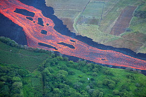 Aerial view of lava river flowing toward Kapoho, Puna District from fissure 8 of Kilauea volcano, near Pahoa, Hawaii. The vegetation on the windward side of the lava river is lush and green, while it... - Doug Perrine