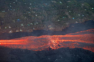 Aerial view of lava river, flowing past remaining homes, toward Kapoho, Puna District. Lava emanating from  erupting from fissure 8 of Kilauea volcano, near Pahoa, Hawaii. June 2018. - Doug Perrine