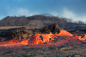 'Lava boat' or 'Lavaberg' (large chunk of partially hardened lava) floats down the lava river flowing through Kapoho, from Fissure 8 of the Kilauea Volcano, Puna District, Hawaii. June 2018. - Doug Perrine