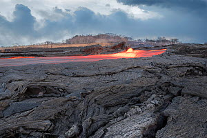 Lava erupting from fissure 8 of the Kilauea Volcano, in Leilani Estates, near Pahoa, Hawaii. Here a river of lava flows  through what was formerly a Papaya orchard in Kapoho, lower Puna District, Hawa...  -  Doug Perrine