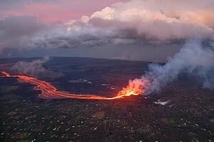Aerial view of a river of lava, from Kilauea Volcano erupting from  fissure 8, Leilani Estates, Pahoa. Puna District, Hawaii. July 2018. June 2018. - Doug Perrine