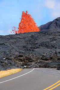 Lava from Kilauea Volcano erupts from a fissure on Pohoiki Road, near Pahoa, Puna District, Hawaii. Downed power poles and guy wires are embedded in the front of the lava flow as it pushes along the s...  -  Doug Perrine