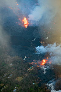 Lava emanating from Pu'u O'o, Kilauea Volcano, erupting from multiple fissures in Leilani Estates, near Pahoa, Puna, Hawaii. The fissure in the lower part of the frame is Fissure 8, which became the d... - Doug Perrine
