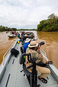 Several boats of tourists watching and photographing Jaguar (Panthera onca) Pantanal Matogrossense National Park, Pantanal, Brazil. - Jeff Foott