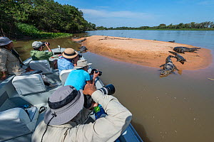 Tourists on boat taking pictures of Yacare caiman (Caiman yacare) on riverbank, Cuiaba River, Pantanal Matogrossense National Park, Pantanal, Brazil. - Jeff Foott
