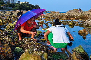 People collecting mussels along Yellow Sea coast. Yangma Island, Yantai, Shandong Province, China. September 2017.  -  Magnus Lundgren / Wild Wonders of China