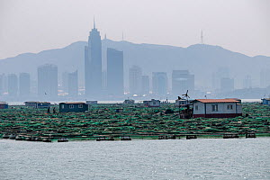 Fish and mussel farms with city skyline and hills in background. Zhifu Island, Shandong Province. Bohai Sea, Yellow Sea, China. September 2017. - Magnus Lundgren / Wild Wonders of China