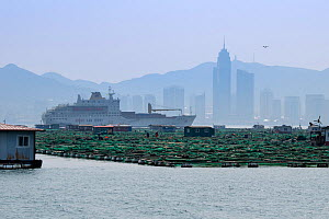 Fish and mussel farms with ferry and city skyline in background. Zhifu Island, Shandong Province. Bohai Sea, Yellow Sea, China. September 2017. - Magnus Lundgren / Wild Wonders of China