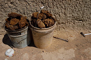 Dry cattle dung, collected in a plastic bucket by Mongolian herdsmen, to use as fuel, Inner Mongolia, China. This is the main source of heat during the winter in these open grassland steppes. - Staffan Widstrand / Wild Wonders of China