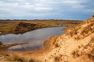 Sand dunes and freshwater pool, Aberffraw Dunes AONB, Aberffraw, Isle of Anglesey, Wales, UK, April. - Mike Read
