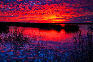 Sunrise over Shoveler Pond, Anahuac National Nature Reserve, Texas, USA, December 2017 - Mike Read