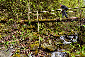 Wildlife photographer Jed Weingarten trekking over a logbridge , Tangjiahe National Nature Reserve,Qingchuan County, Sichuan province, China - Staffan Widstrand / Wild Wonders of China