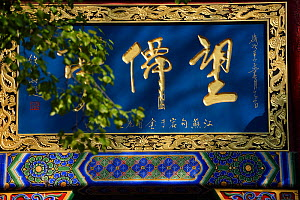 Louguantai temple, Xian, Shaanxi, China. This temple is where Lao Tze wrote the Tao Te Ching. - Staffan Widstrand / Wild Wonders of China