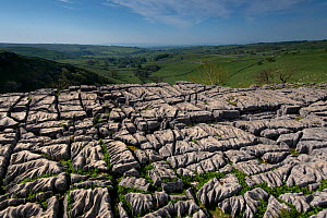 Karst landscape in Carboniferous (Dinantian) Limestone, with Clints and Grykes developed on a limestone pavement. Malham, Yorkshire, UK, May  -  Graham Eaton