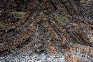 An anticline in deformed Carboniferous sandstones and shale (Culm Measures) near Bude, Cornwall, UK, March. These rocks were deformed during the Hercynian or Variscan Orogeny, a mountain building even...  -  Graham Eaton