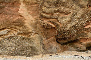Glacial Sand and Gravel deposited within a kettle hole, Baumaris, Anglesey, Wales, UK, June. Sediment is deposited around a block of ice left near the front of a melting or retreating glacier. When th... - Graham Eaton