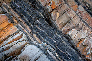 Small extension (normal) faults within a layer of shale between two layers of more competent sandstone. Carboniferous, turbidites, Bude, Cornwall, UK, May. - Graham Eaton