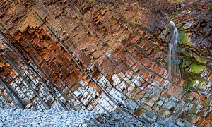 Tilted beds of sandstone and thin shales of the Carboniferous, Culm Measures (Bude Formation) Sandy Mouth near Bude, Cornwall, UK, May. The bed represent cycles of deposition associated with climate c... - Graham Eaton