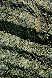 Crenulation cleavage developed in Pre-Cambrian age chlorite schist, a metamorphic rock Llyn, Wales, UK, May - Graham Eaton
