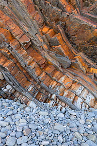 Tilted beds of Carboniferous age, Culm Measures (Bude Formation) sandstone and shale, Bude, Cornwall, UK, May. - Graham Eaton