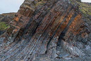 Steeply dipping beds of Carboniferous age sandstone and shales (Culm measures) on the flank of a large fold. This deformation was formed by compression during the Variscan or Hercynian orogeny, a geol...  -  Graham Eaton