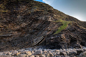 A thrust fault in Carboniferous age Sandstones and shales (Culm Measures) at Crackington Haven, near Bude, Cornwall, March. The rocks comprise the Crackington Formation of thinly bedded turbidite sand...  -  Graham Eaton