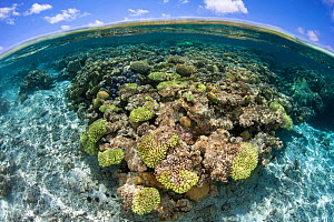 South Minerva Reef also known as Teleki Tonga a disputed territory in the South Pacific between Tonga and Fiji. January 2015. - Richard Robinson